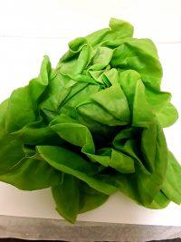 lettucesoftround.jpg