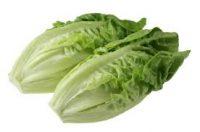 lettucecos