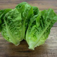 lettucelittlegem